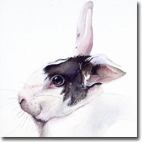 Rabbit pet portrait in watercolour paint, by Joanna Culley, Pet Portrait Artist