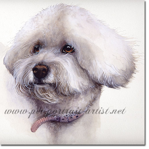 Portrait of a Bichon Frise, by Joanna Culley