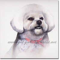 Portrait of a Bichon Frise by Joanna Culley