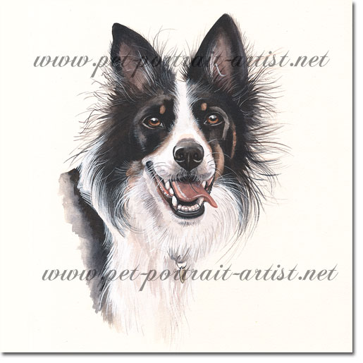 Dog Portrait of a Collie, by Joanna Culley