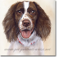 Springer Spaniel Portrait, by Joanna Culley, Pet Portrait Artist