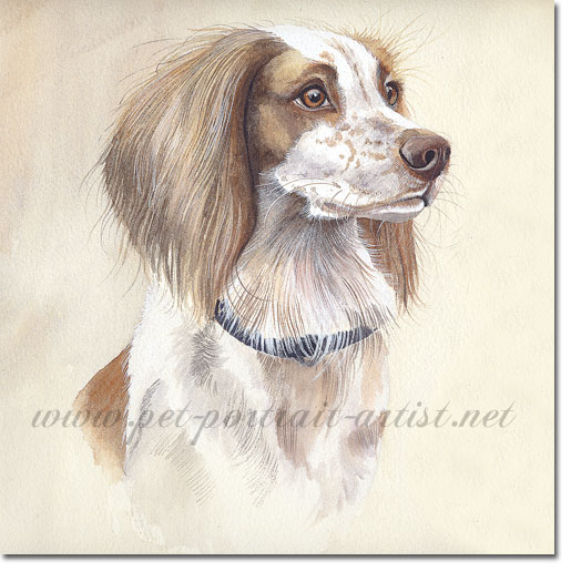 Watercolour painting of a Springer Spaniel, by Joanna Culley