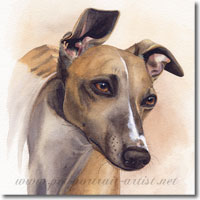 Whippet Pet Portrait, by Joanna Culley, Pet Portrait Artist