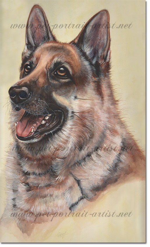 Dog Portrait of Gerry a German Shepard, by Joanna Culley dog portrait artist