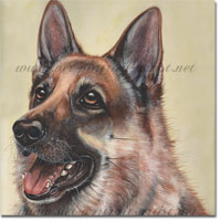 Dog Portrait of a German Shepherd, Gerry.