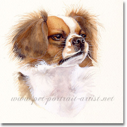 Grif, Watercolour Pet Portrait Pet Portrait by Joanna Culley
