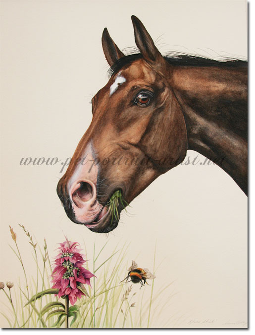 Equine portrait in Watercolour - Horse Mint, by Joanna Culley
