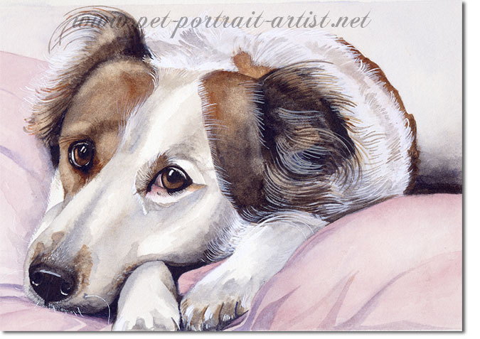 Portrait of a Collie, Humphrie, by Joanna Culley