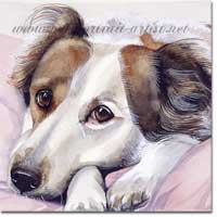 Collie dog portrait in watercolour paint, by Joanna Culley, Pet Portrait Artist