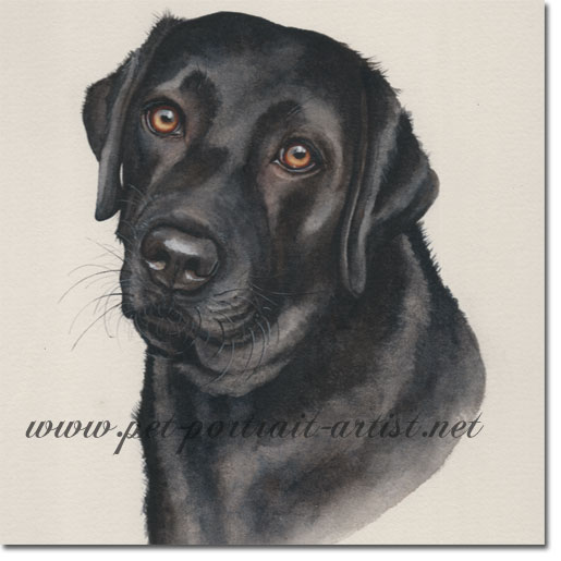 Dog Portrait Inka Black Lab Watercolour Dog Portraits