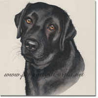 Portrait of a Inka a Black Lab