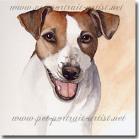 Bella, Jack Russell Terrier, by Joanna Culley, Pet Portrait Artist