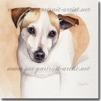Watercolour Portrait of a Jack Russell Terrier, by Joanna Culley, Pet Portrait Artist