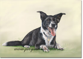 Collie Dog Lochan Portrait in Watercolour