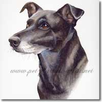 Neesa, dog portrait in watercolour paint, by Joanna Culley, Pet Portrait Artist