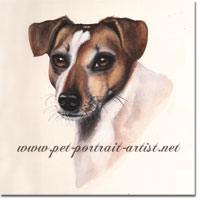 Jack Russell dog portrait in watercolour paint, by Joanna Culley, Pet Portrait Artist