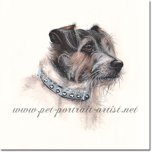 Jack Russell Dog Portrait of Sydney, by Joanna Culley acclaimed animal artist