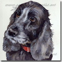 Watercolour Portrait of a Spaniel, by Joanna Culley, Pet Portrait Artist