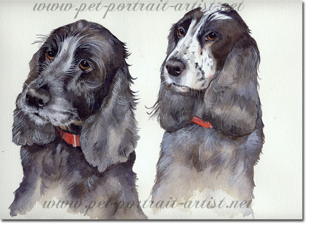 Watercolour Portrait of two spaniels,  by Joanna Culley