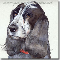 Spaniel Portraits, by Joanna Culley, Pet Portrait Artist