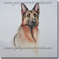 Portrait of Alsation Dog, by Joanna Culley, Pet Portrait Artist. Click for larger view
