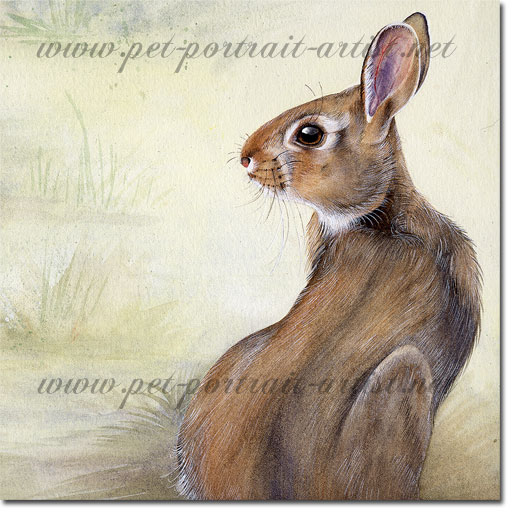 Portrait of a rabbit by Joanna Culley