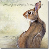 Watercolour painting of a rabbit by Joanna Culley
