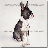 Dog Portrait of a Boston Terrier by Joanna Culley, Pet Portrait Artist