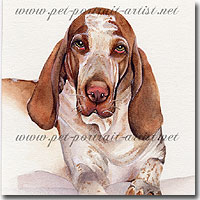 Watercolour Portrait of a Italiano bracco, by Joanna Culley, Pet Portrait Artist