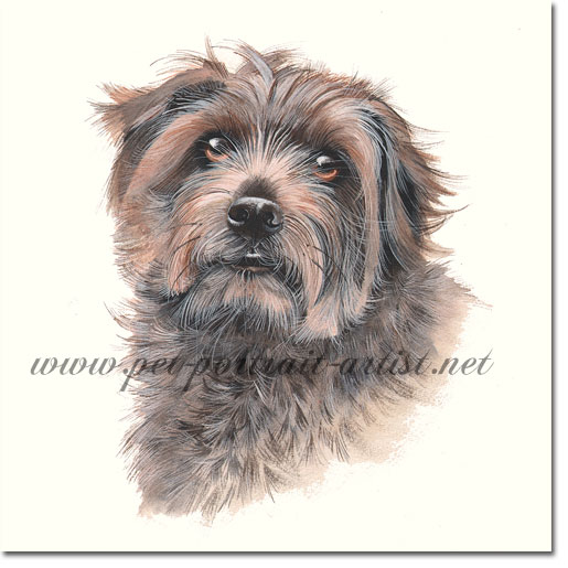 Dog Portrait of Cassie, by Joanna Culley pet portrait artist