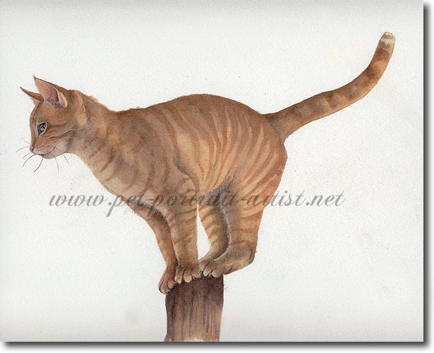 Watercolour Cat Portrait of Tiger on a Post,  by Joanna Culley