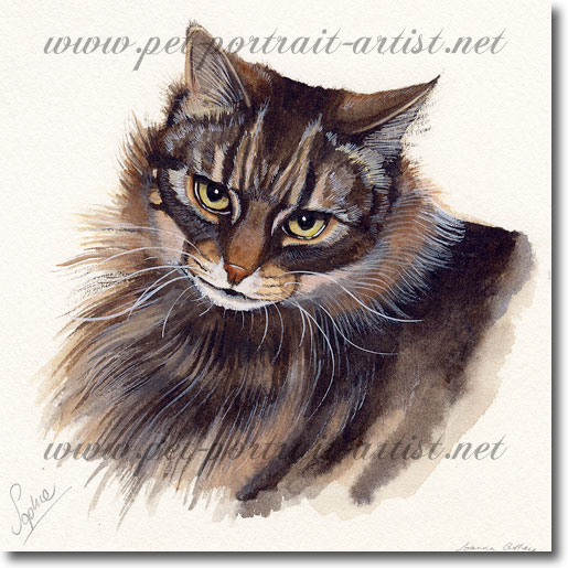 Watercolour Pet Portrait of Sophie the Cat,  by Joanna Culley