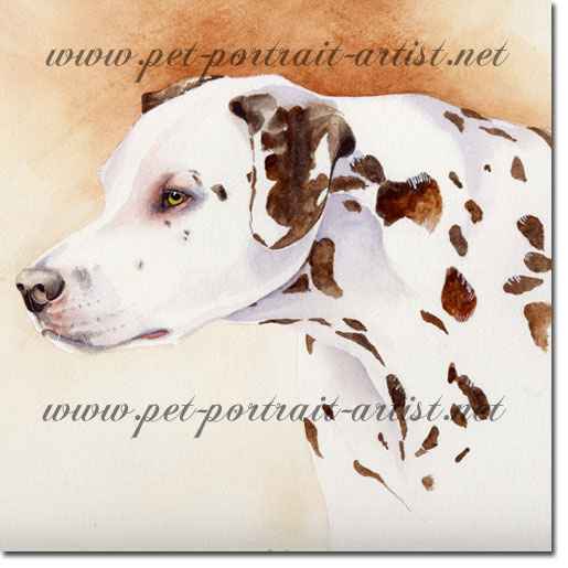 Dog portrait of a dalmation, by Joanna Culley