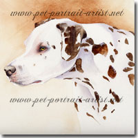 Portrait of Buttons, a Dalmation by Joanna Culley, Pet Portrait Artist. Click on image to see enlarged version of  Dalmation portrait.