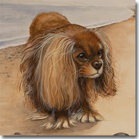 Dog Portrait of a Spaniel on a beach by Joanna Culley.