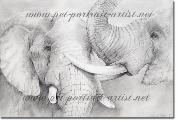 Portrait of two elephants by Joanna Culley