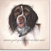 Springer Spaniel Watercolour Portrait