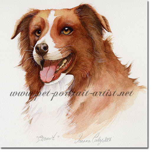 Portrait of a Brown Collie, Gromit, by Joanna Culley