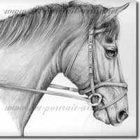Pencil Portrait of a Horse. Click on image to see large version