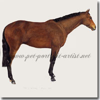 Portrait of Man of Kashmir, Thoroughbred Horse by Joanna Culley