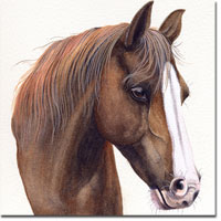 Horse Portrait of Amy