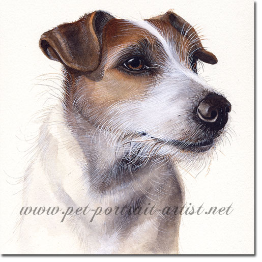 Portrait of a Jack Russell Terrier, by Joanna Culley