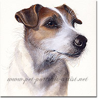 Portrait of a Jack Russell Terrier by Joanna Culley
