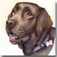 Lottie a Labrador Pet Portrait, by Joanna Culley, Pet Portrait Artist