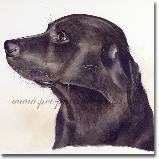 Portrait of a Labrador, Toby, by Joanna Culley