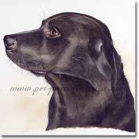 Labrador pet portraitof Toby, in watercolour paint, by Joanna Culley, Pet Portrait Artist