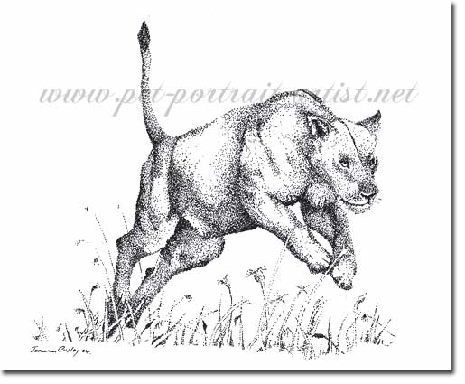 Pen and Ink Drawing of a Lioness, by Joanna Culley