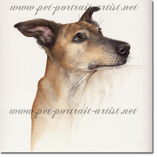 Portrait of a Lurcher Dog, by Joanna Culley