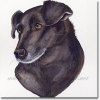 Millie Pet Portrait, by Joanna Culley, Pet Portrait Artist