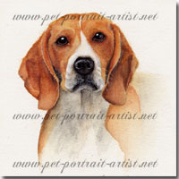 Portrait of a pet beagle by Joanna Culley